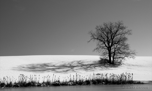 tree in snow-covered field