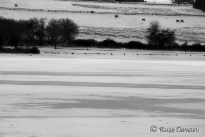 marsh creek, lake, winter, snow, horses