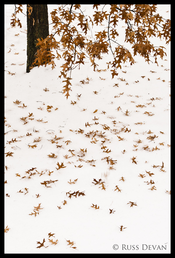 Oak Leaves Over Ice