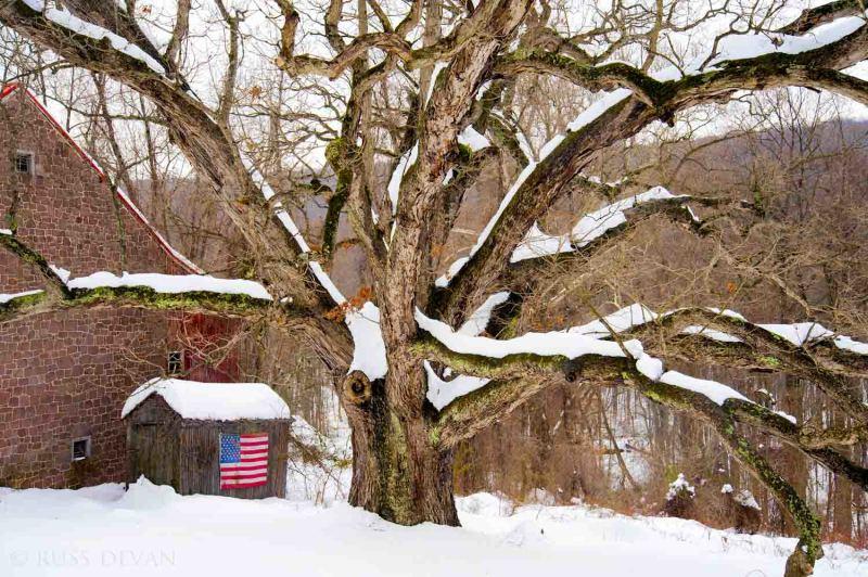 snow-covered oak tree next to stone barn w/US flag
