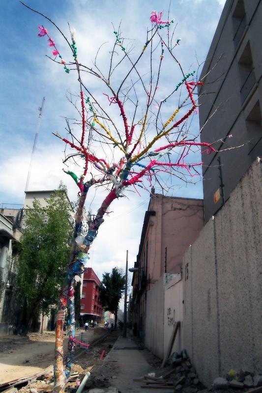 arbol sobrevive a las obras en Regina