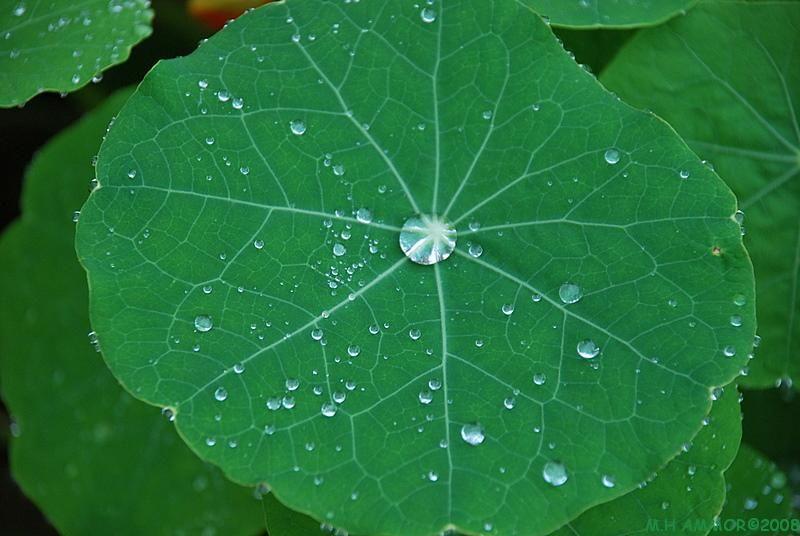 Perles de nature