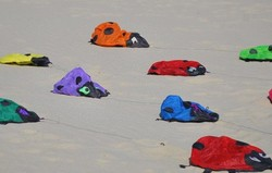 Silly Tuesday :Ladybugs on the beach ...! !