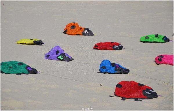 Silly Tuesday :Ladybugs on the beach ...! !