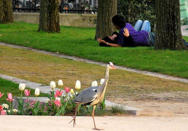 Chuuut ...Love is in the garden ...