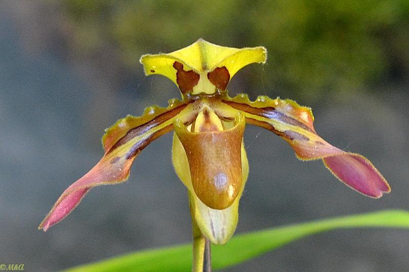 Passions d'orchidées 4