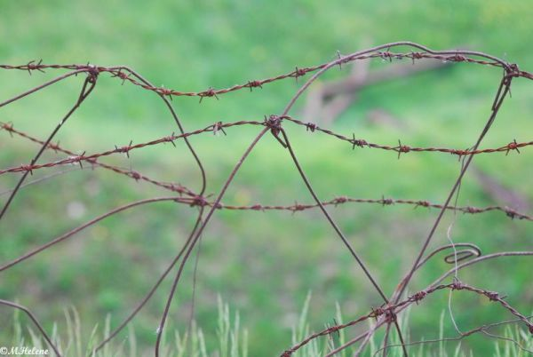 Barbed wires / Les barbelés