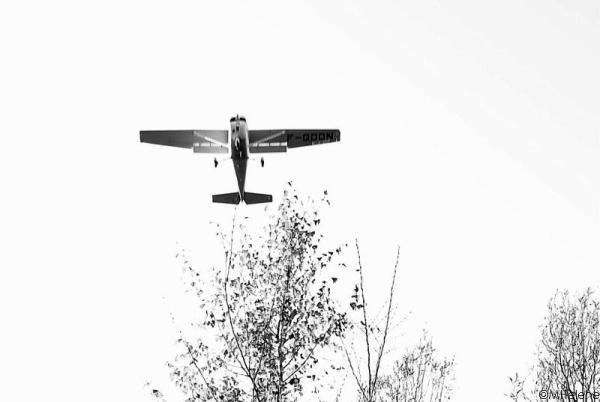 Rase-mottes au-dessus de la forêt
