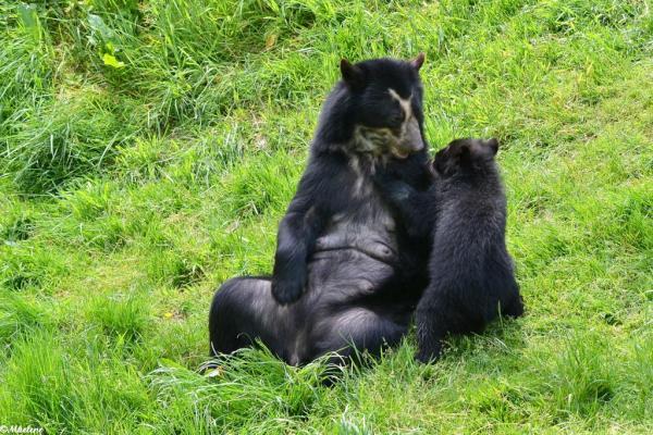 P'tit ours et sa maman - 2