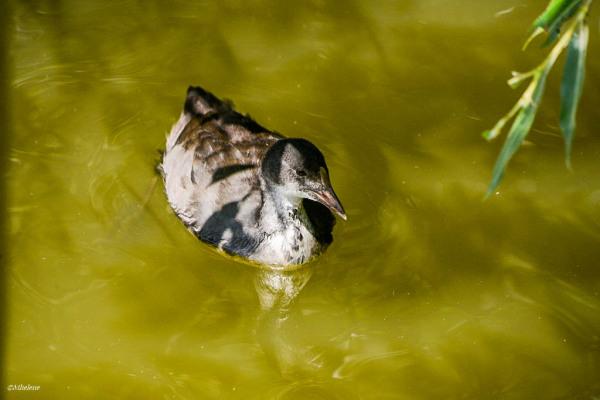 Le petit monde de l'étang - 3