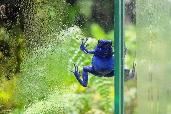 Help...je glisse...!...slippery window...