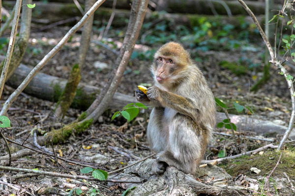 Terre de singes - 3