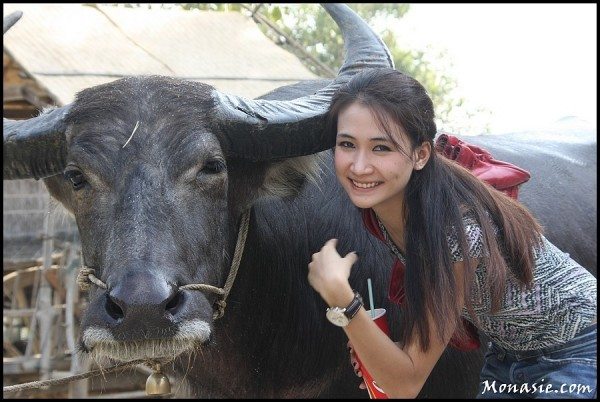 Beautifull Bufalo ... (Suphan Buri - Thailand)