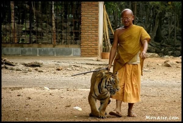 Tiger Wat (Kanchanaburi Thailand)