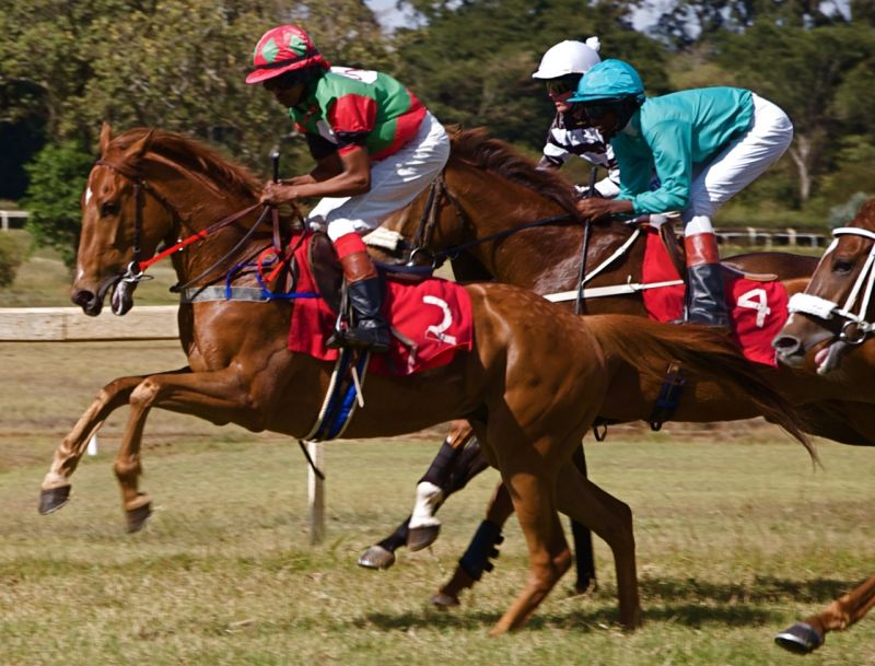 Horses looking for position, Ngong races, Kenya
