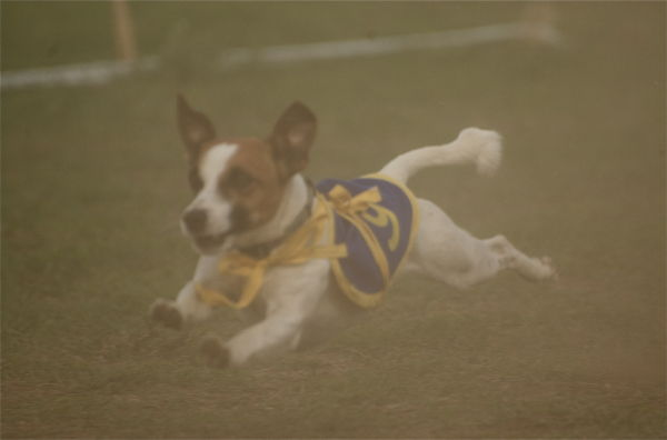 Terrier race, Kenya