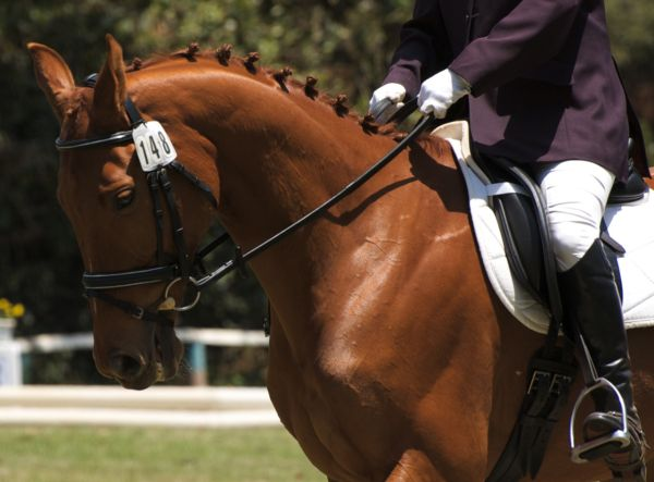 Prince of Africa competing in FEI event, Nairobi