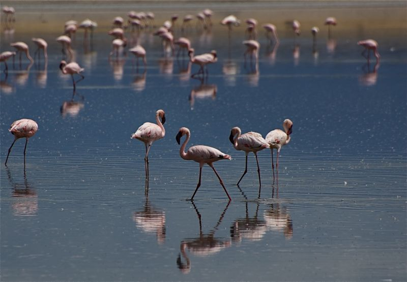 Lake Magadi flamingos