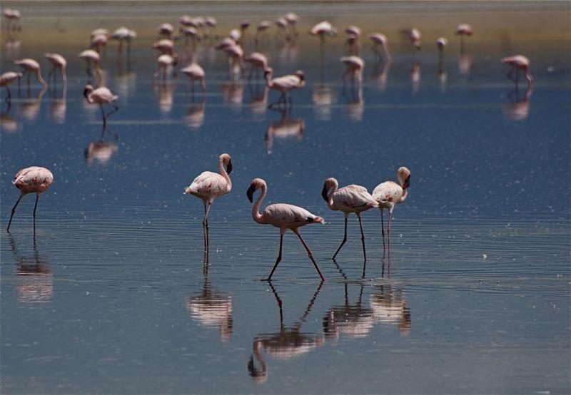 Lake Magadi flamingos
