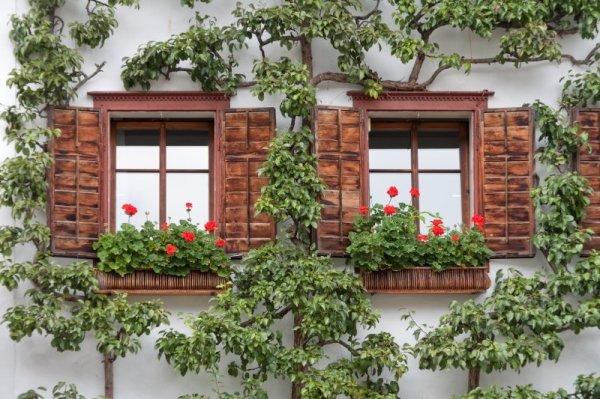 Windows in a Tree