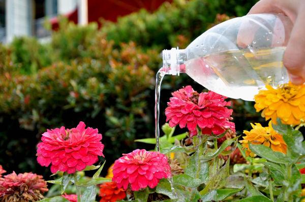 Watering...........