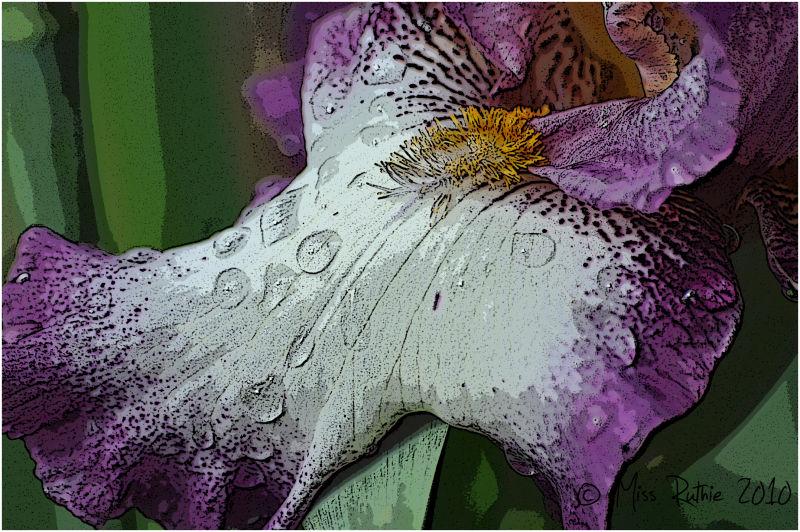 The Iris...