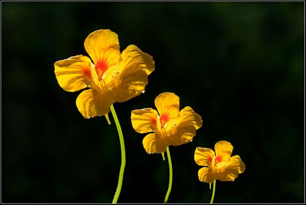 Three views - one flower