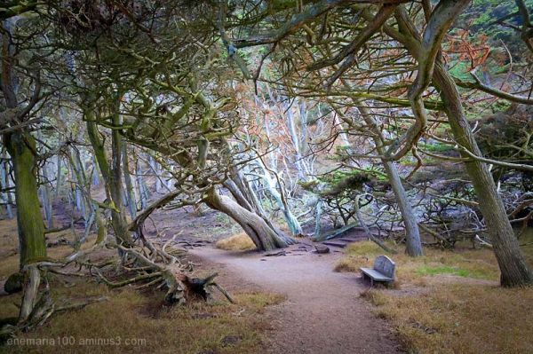 Cypress Grove, Point Lobos State Reserve, Carmel,