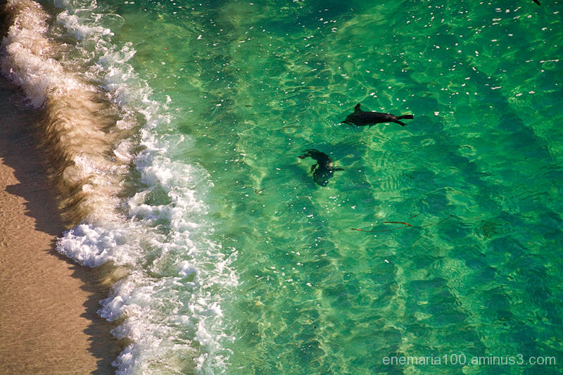 Baby Sea Lions at China Cove, Point Lobos
