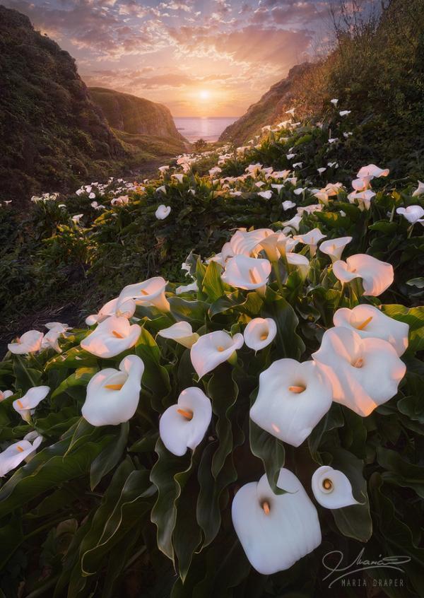 Garrapata Beach, Big Sur, California