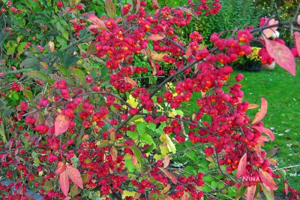 red plant