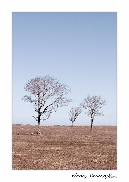 Three Trees by Henry Krauzyk ©2006