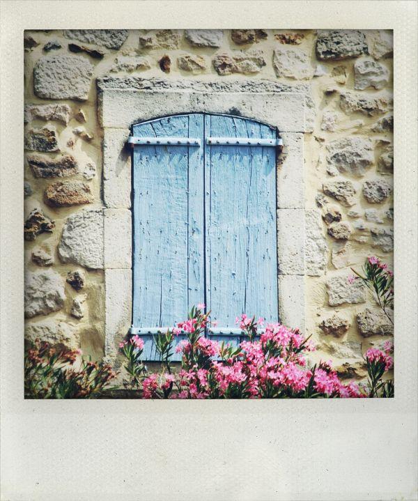 Laurier Rose & Volet Bleu