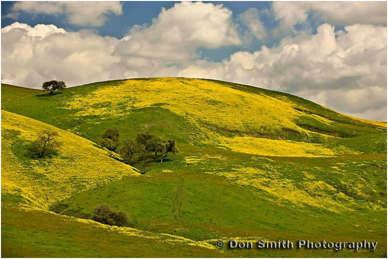Springtime hills in southern San Benito County