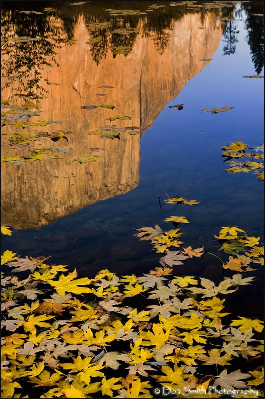 El Capitan and Fall Leaves