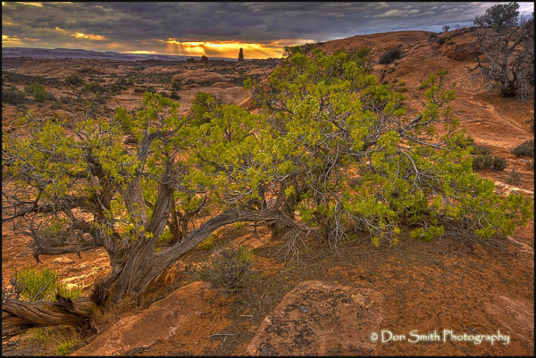 Juniper Bush and Sunset over Balanced Rock