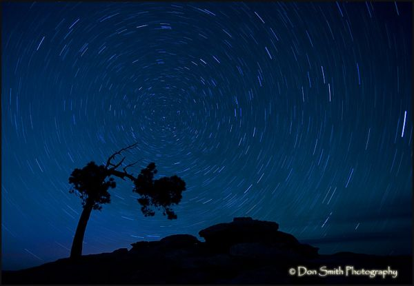 Jeffrey pine and star trails on Sentinel Dome