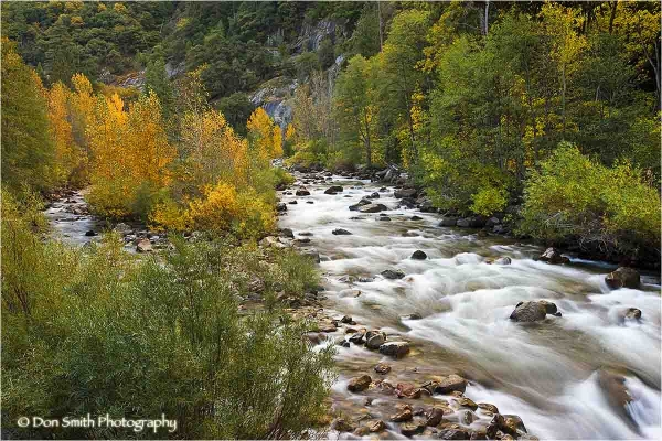 Fall color along the banks of Kings Canyon River.