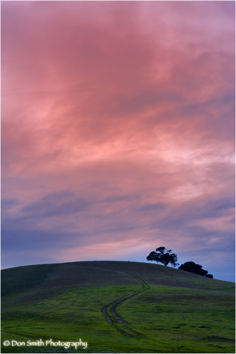 Rolling hills and oaks against sunrise sky.