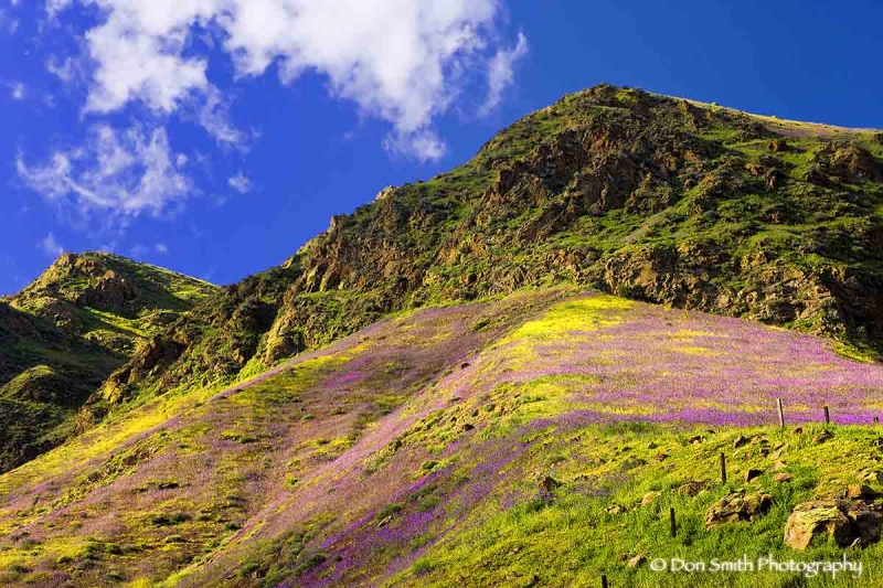 Colorful hillside of spring wildflowers.