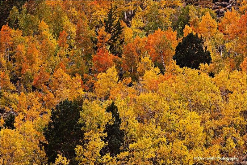 Fall color, Rock Creek Canyon, eastern Sierra.