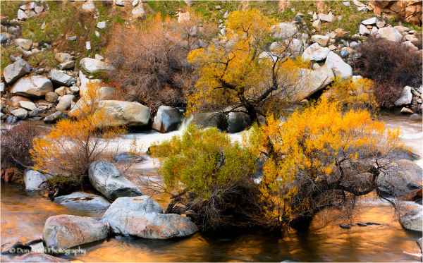 Cottonwood in fall color, Kern River Canyon