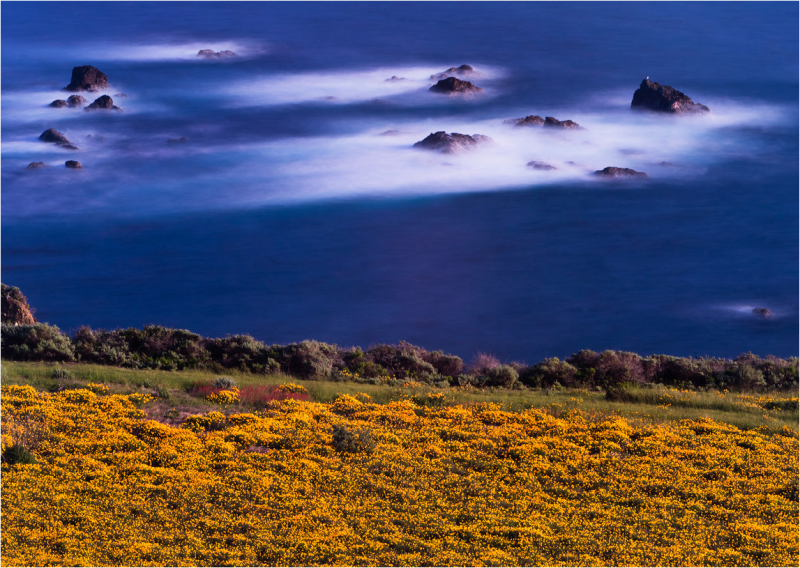 Blurred surf and poppy field, Big Sur coast, Calif