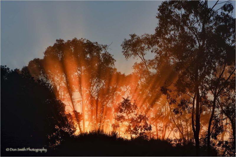 Crepuscular rays through fogbank.