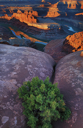 Sunrise, Dead Horse Point SP, Utah