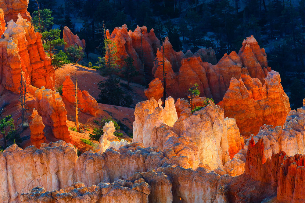 Glowing hoodoos at Bryce Canyon National Park.