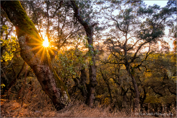 don smith photography, fuji XT-1 review, images