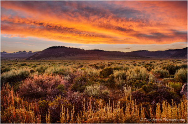 High Desert Glow, Lee Viniing, CA, TK Action Palet
