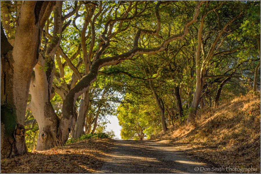 Oak Tree Tunnel, Elkhorn Slough, Sony 70-200mm f/4