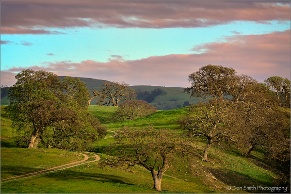 Late Afternoon Light, Diablo Hills, California